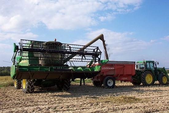 Harvesting industrial hemp is legal pretty much everywhere except the U.S. - WIKIMEDIA/ALEKS