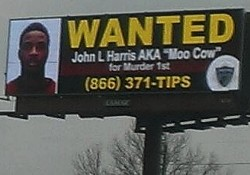 Moo Cow is on the loose. Really. - VIA REDDIT