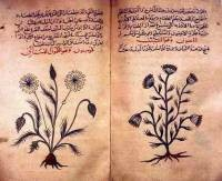 Is there an herb that aids blogging? - WIKIMEDIA COMMONS