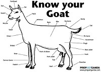 Gut Check's got your goat.