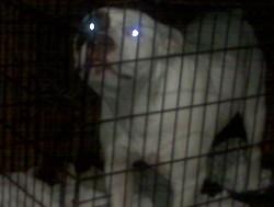 Petey, Ahmed's dog. - TALAL AHMED
