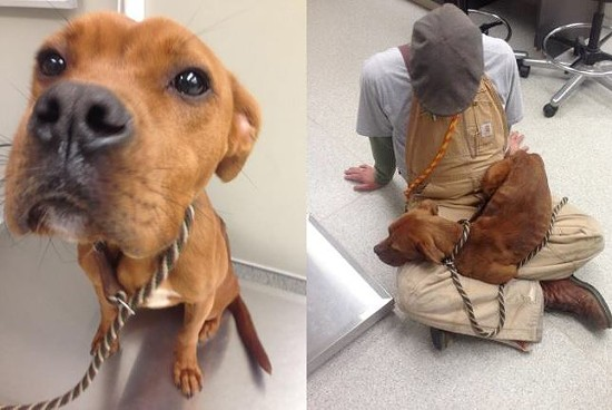 Rustic the dog cuddles after his rescue.