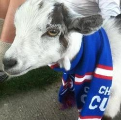 Wrigley the Goat: More powerful than a Rally Squirrel?