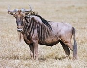 What's gnu? Not much, what's gnu with you?