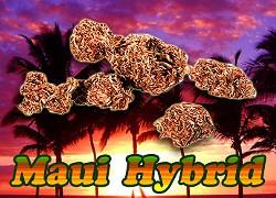 At least this stuff kinda looks like real weed.
