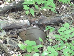 Buried treasure at Strecker Forest - ENVIRONMENTAL STEWARDSHIP CONCEPTS