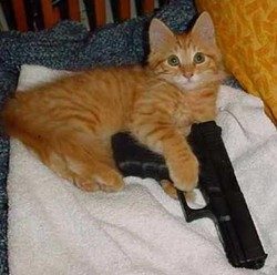 Cat-astrophic Idiot: See what happens when you try to kill kitty!