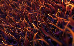 Cilia viewed under an electron microscope. - IMAGE VIA
