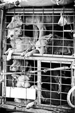 puppymill2.jpg