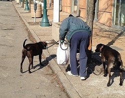 Molitor and his dogs cover three to four miles a day and collect bags of trash along the way.