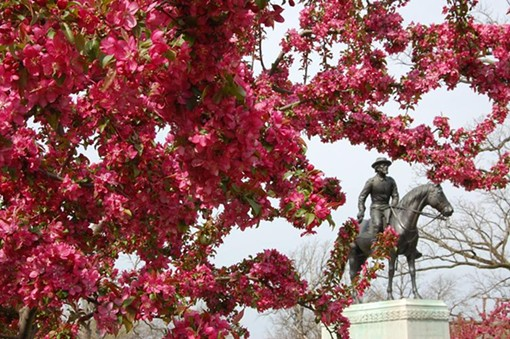 Crab apple tree at the Sigel Statue - PHOTO BY NICHOLAS PHILLIPS