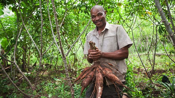 Ramadhan Abdulla, a Tanzanian cassava farmer who has benefited from the Danforth Center's expertise and the Gates Foundation's money. - IMAGE VIA