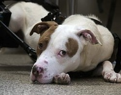 The dog that miraculously survived. - VIA STRAYRESCUE.ORG