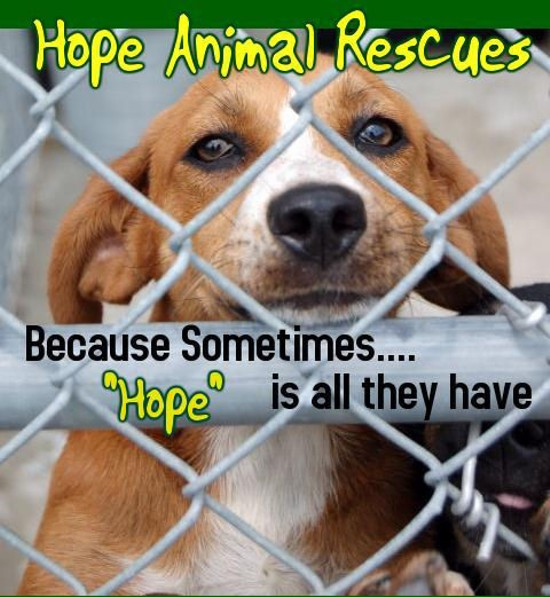 Hope Rescues. - VIA FACEBOOK
