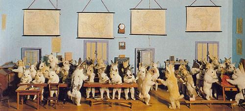The Rabbits' Village School, 1888 - A CASE OF CURIOSITIES