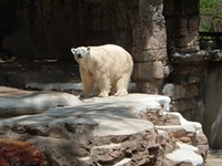 The zoo's polar bear confines. - FLICKR.COM/PHOTOS/79947165@N00