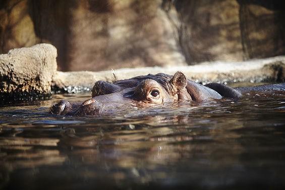 Hippo Harbor is pretty romantic. - STEVE TRUESDELL
