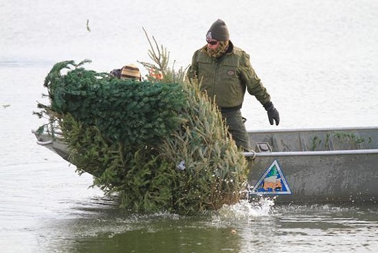 Missouri Department of Conservation Fisheries staff sink leftover Christmas trees into Creve Coeur Park Lake which fish will use for habitat. Cement blocks tied to the trunk are used to get the trees to stay down. - MDC