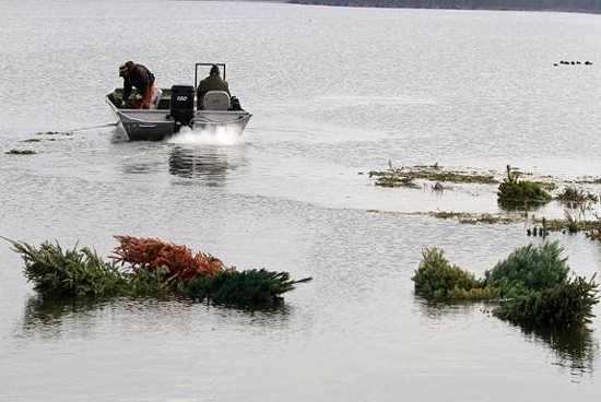 Fisheries staff from the Missouri Department of Conservation leave after installing recycled Christmas trees into Creve Coeur Park Lake. The trees will find a new use as habitat for fish. - MDC