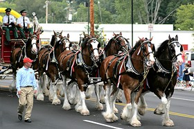 Got a spare two grand? Invite the Clydesdales to your birthday party! - IMAGE SOURCE