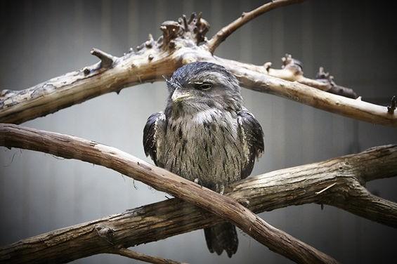 This bird is still hungover from Mardi Gras. - STEVE TRUESDELL