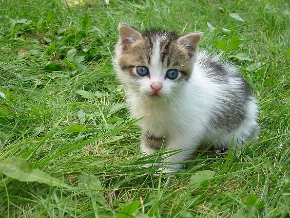 This is not the kitten who died, but it was probably just as adorable. - KRZYSZTOF P. JASIUTOWICZ/WIKIMEDIA