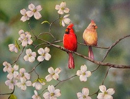Redbirds are pretty. Casinos are not. - IMAGE SOURCE