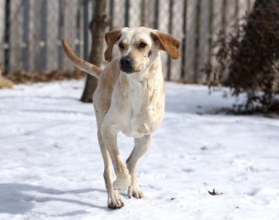 Marshall, the real-life miracle dog. - MIKE BIZELLI