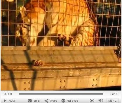 St. Louis County has now seen proof that the tiger whose paw got stuck in his cage earlier this month has been checked out by a vet.