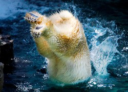 A suspected Madison County meth maker took a polar bear plunge while attempting to elude police - IMAGE VIA NATIONAL GEOGRAPHIC