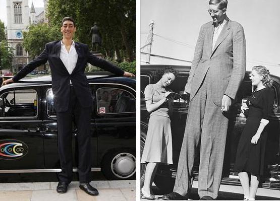"Sultan Kosen stands 8'1"" compared to Robert Wadlow's 8'11""."
