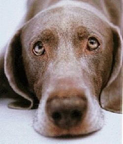 Obligatory sad puppy photo.
