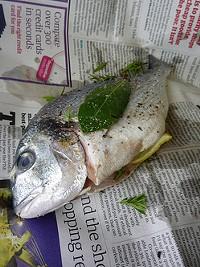 fishwrapper_thumb_250x333.jpg