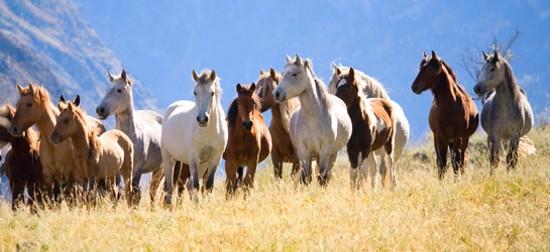 Wild horses. - VIA ASPCA.ORG