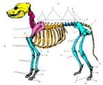 Some say their pups were just a pile of bones after devouring ham bones. - WIKIMEDIA COMMONS