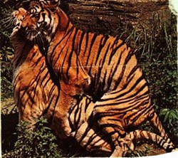 How will the Tigers be screwed this year?