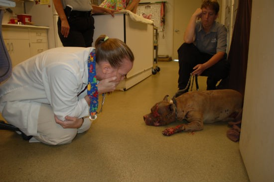 Julie Brinker, shelter veterinarian, and Anne Vincent, animal cruelty investigator, with Zeus. - HUMANE SOCIETY OF MISSOURI
