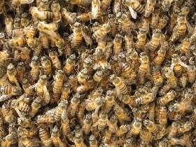 Whatchoo doin', crazy bees? - IMAGE VIA