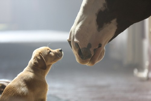 The Internet cannot handle this cuteness. - YOUTUBE/BUDWEISER