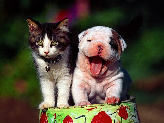 The Humane Society of Missouri offers tips on handling civil unrest for pet owners. - NGUYENHOANGNAM VIA FLICKR