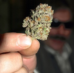 Y'all sure love when we write about ganja. - CANNABIS CULTURE ON FLICKR