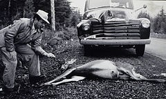 Roadkill's good eats. Organic picnics aren't. - WIKIMEDIA COMMONS