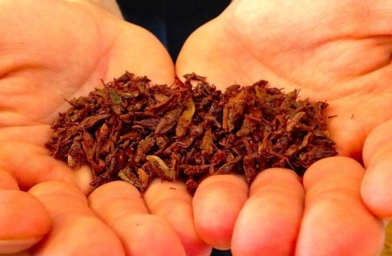 FRIED GRASSHOPPERS AT GRINGO | CARY MCDOWELL