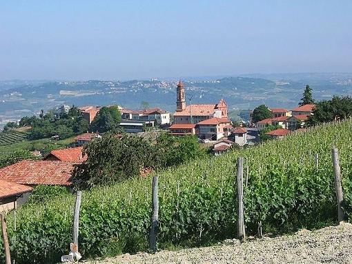 "A vineyard in the Piedmont region - USER ""CLOUD7,"" WIKIMEDIA COMMONS"