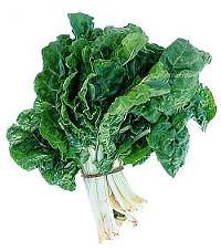 www.plantbreeding.org