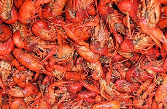 Lots_of_crawfish.jpg
