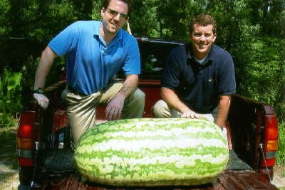 Party at Bill's place! - GIANTWATERMELON.COM