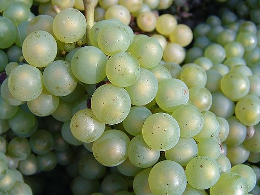 A close-up of chardonnay grapes. - DAN RANDOM, WIKIMEDIA COMMONS