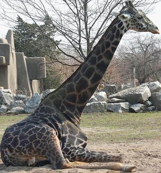 Whoa, that's a lotta neck! - IMAGE VIA