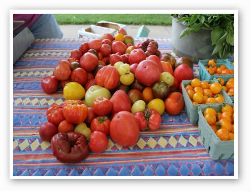 A Gathering of tomatoes. | Pat Kohm